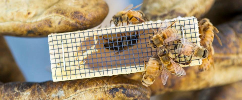 New honey bees arrive at MSU Horticulture Farm, support pollinator research.