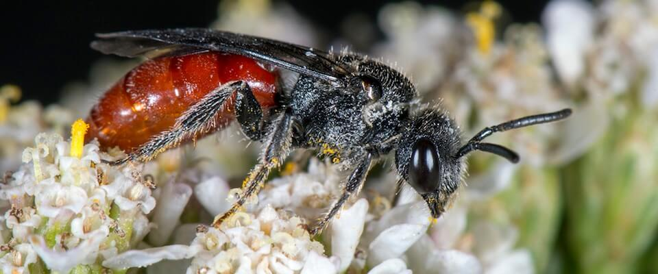 MSU professor creates online photobook of regional insects.