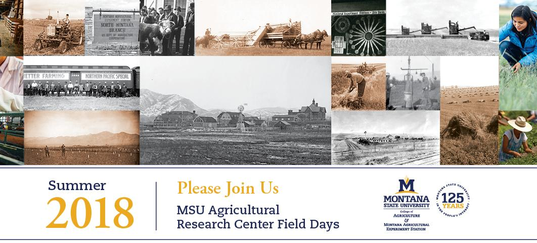 Field Days Postcard